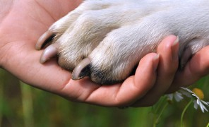 You can help us help pets.