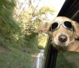 Summer Pet Concerns