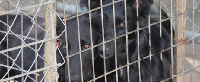 Black Dog Syndrome…really?!