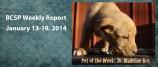 BCSP Report – Week 3