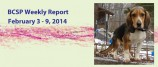 BCSP Report – Week 6