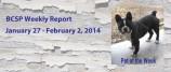 BCSP Report – Week 5