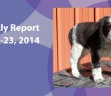 BCSP Report – Week 12