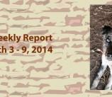 BCSP Report – Week 10