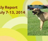 BCSP Report – Week 29