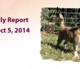 BCSP Report – Week 40