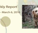 BCSP Report – Week 9