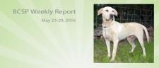 BCSP Report – Week 21