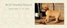 BCSP Report – Week 37