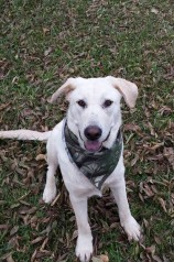 Happy Tails Update – Henry!