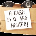 spay-neuter
