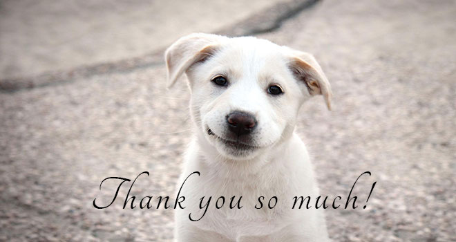 thank-you-doggie