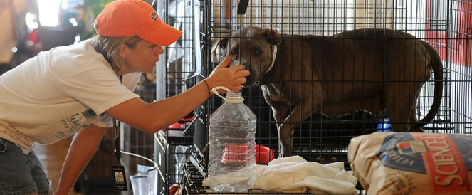 Caring for Shelter Pets