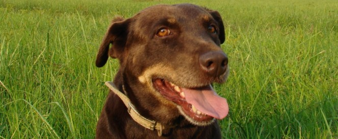 Pet of the Week – Nellie Null