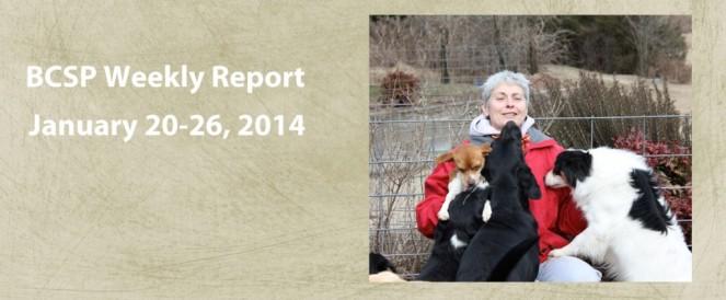 BCSP Report – Week 4